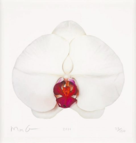 White Orchid by Marc Quinn at