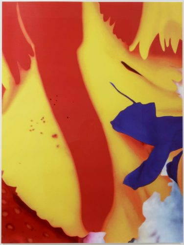 Close Up 2 by Marc Quinn at