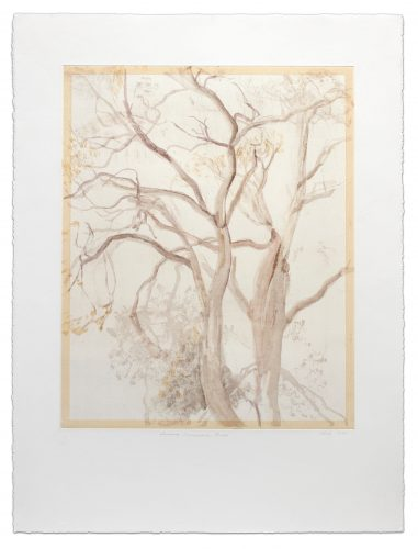 Provincetown Tree by Sylvia Plimack Mangold at