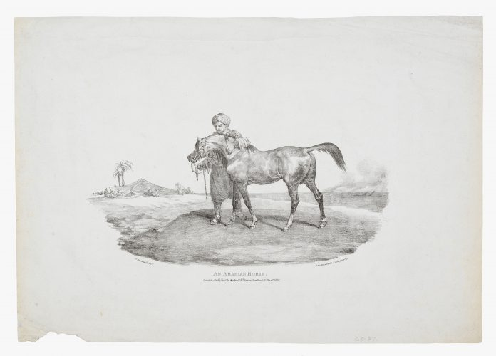An Arabian Horse by Théodore Géricault at