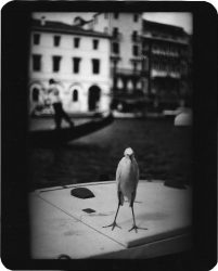 Untitled (Heron Venice) by Giacomo Brunelli at FEUTEU