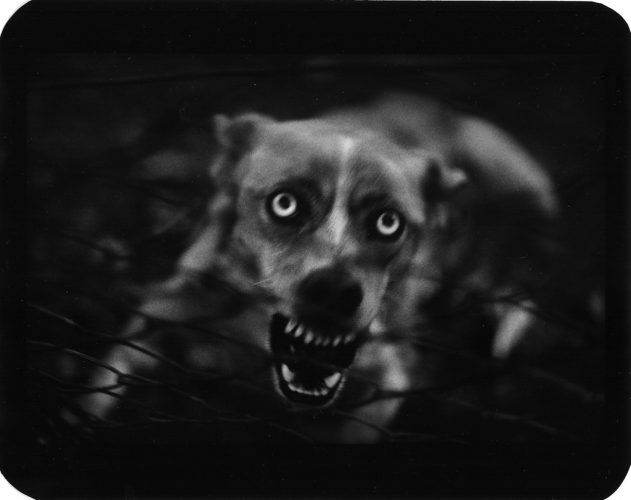 Untitled (Dog) by Giacomo Brunelli at