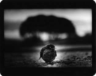 Untitled (Bird and Trees) by Giacomo Brunelli at FEUTEU
