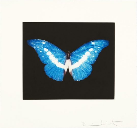 To Begin (Blue/White Butterfly) by Damien Hirst at Osborne Samuel Gallery