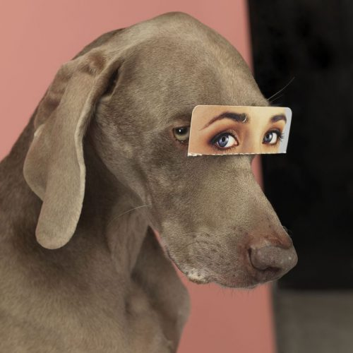 False Eyes by William Wegman at