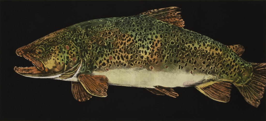 Brown Trout by Jack Cowin at
