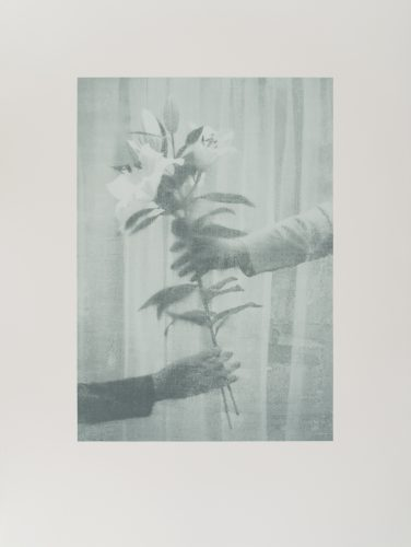 Paul Winstanley  – Lilies by The Help Portfolio at