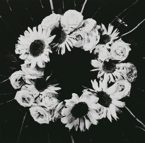 Untitled (flower) by Claudia Jaguaribe at