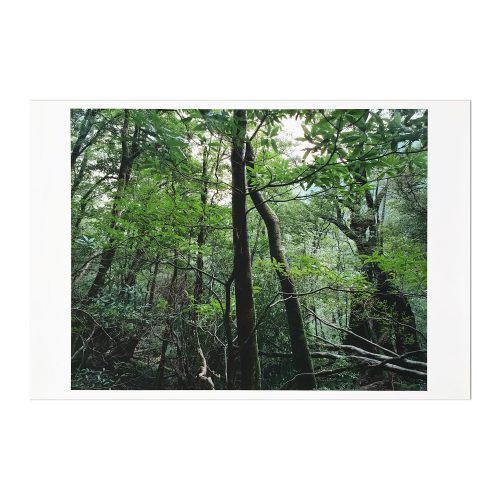 Yakushima by Thomas Struth at