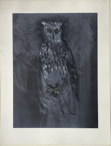 Great Horned Owl by Jim Dine at