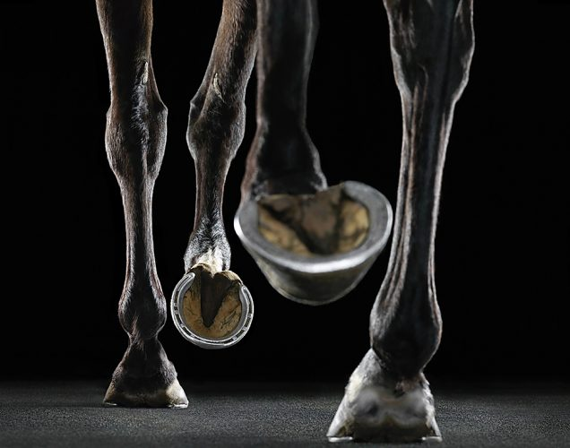 Newmarket Treadmill by Tim Flach at