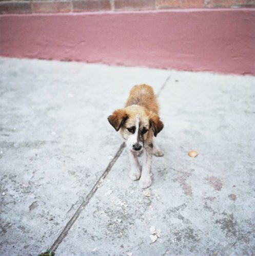 Untitled (dog) Bogota by Alec Soth at FEUTEU