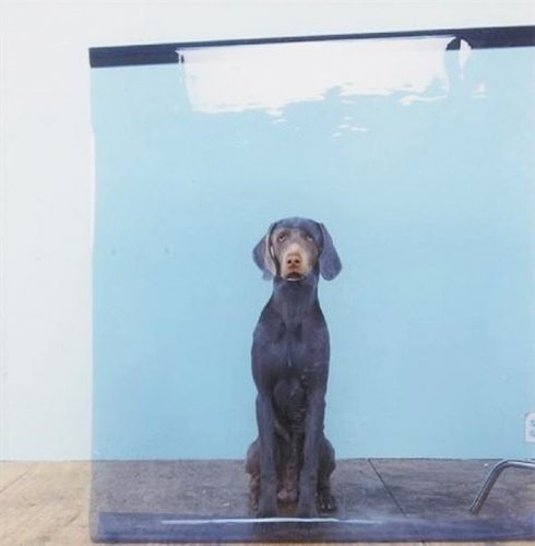 Lakeview by William Wegman at